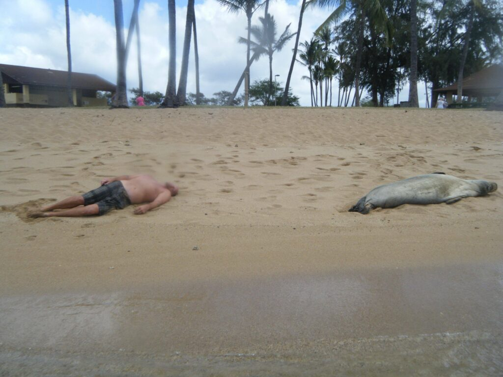 A man and a seal passed out on the beach.