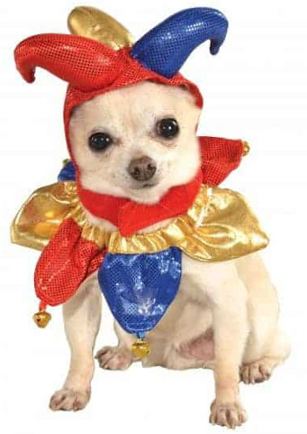 A dog dressed in a red and blue jester costume.