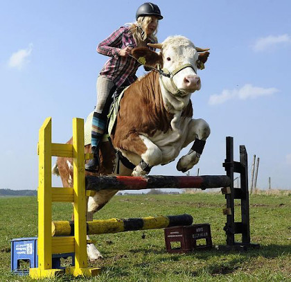 A woman in a riding outfit (flannel shirt, pants, tall socks, boots, and a black riding cap) on top of a cow jumping over a post.