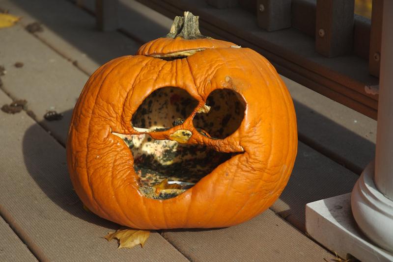 A shriveled-up, moldy, carved pumpkin